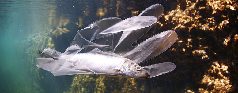 Fish Pollution