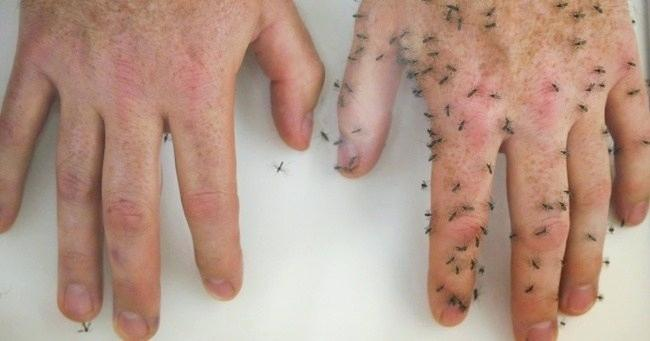 Two hands - one with mosquitos one without
