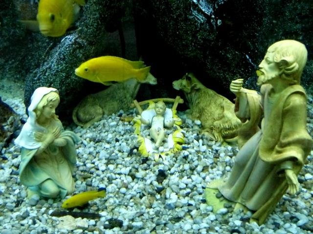 Underwater Nativity