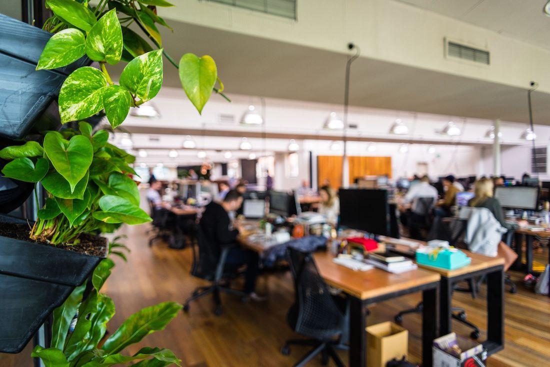 Photo: Plants around desk area