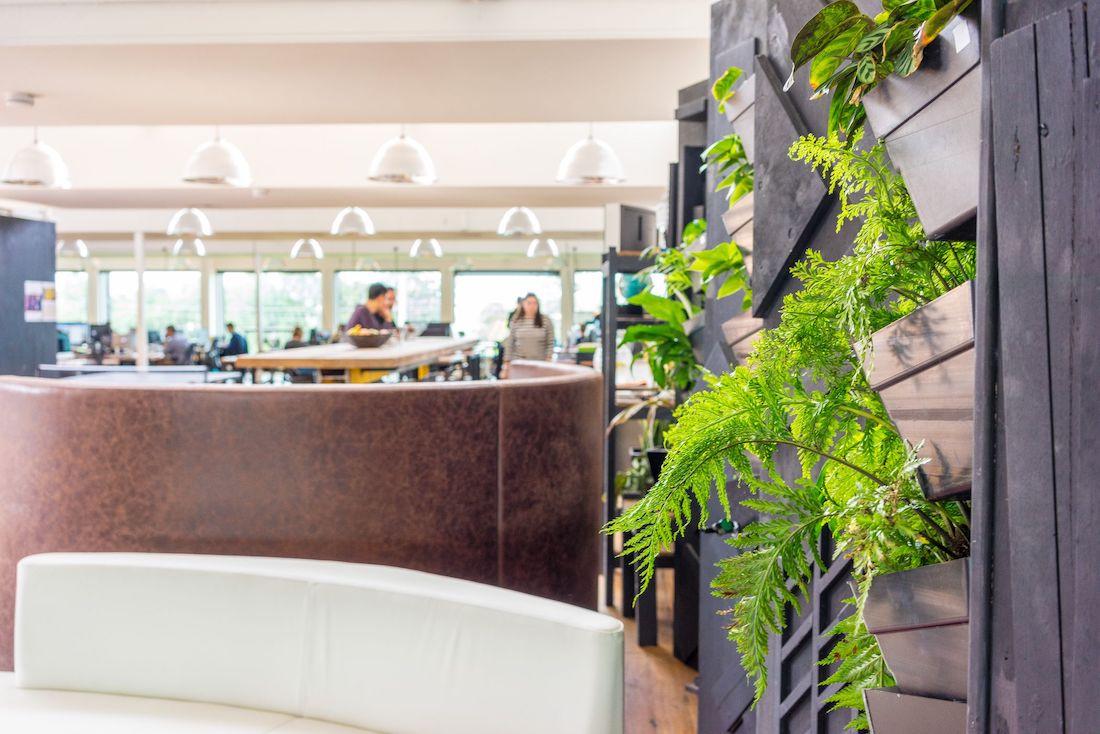 Photo: Plants around reception