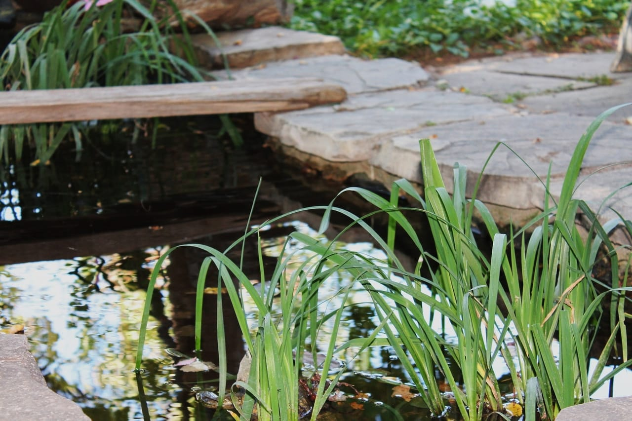 pond-with-tall-grass-and-stone-pavement