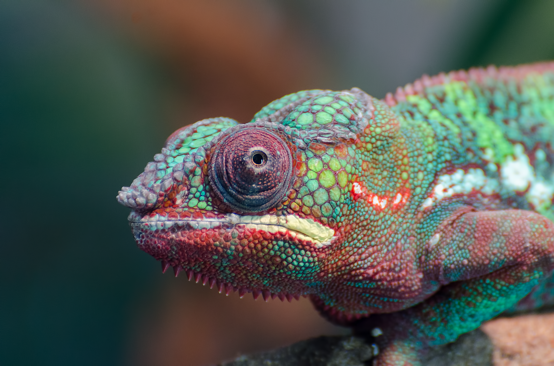 influence-be-a-chameleon