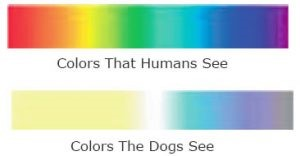 Color spectrum chart showing what dogs can see, vs what humans can see
