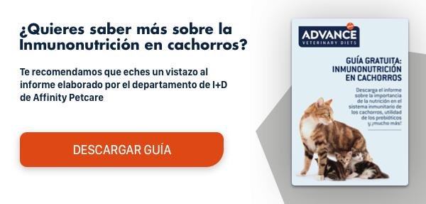 Calendario Vacunas Perros.Vacunas Obligatorias Perros Cuales Son Y Cuando Ponerlas Vets