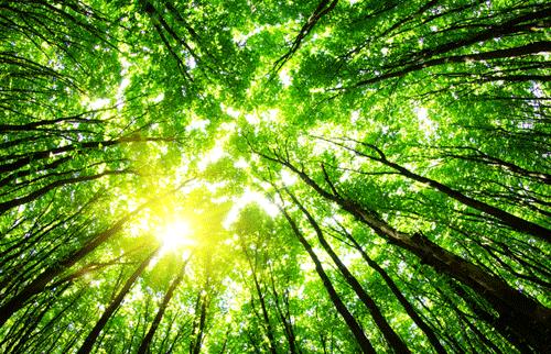 Oxbow Carbon