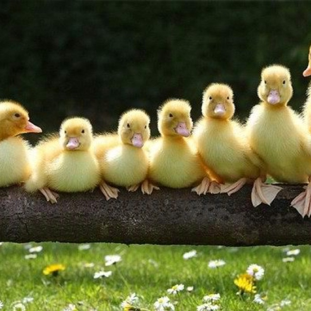 College funding after divorce, getting your ducks in a row