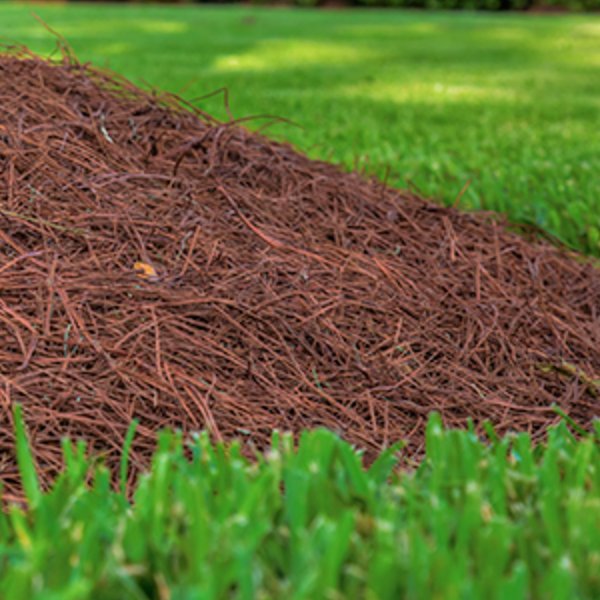 mulch-in-spring