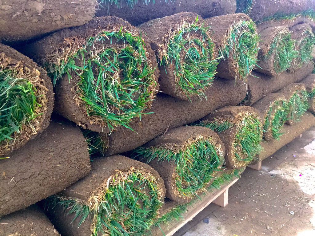 sod ready to be placed.jpg