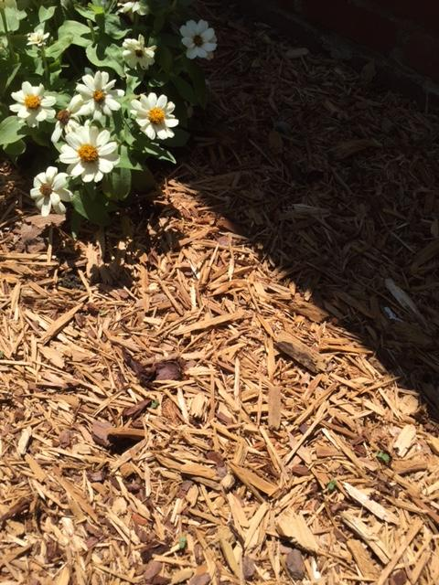 hardwood mulch is one of the best mulches for commercial landscapes