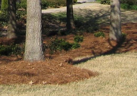pine straw is one of the best types of mulch for commercial landscapng