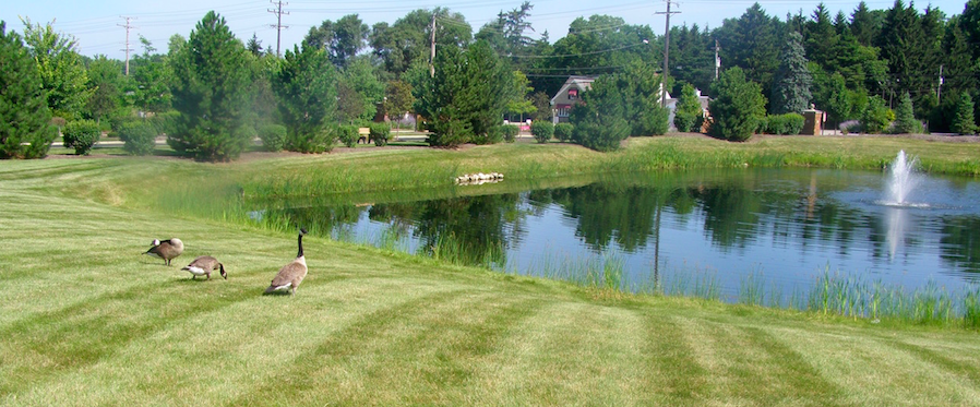 3 Retention Pond Maintenance Essentials To Keep You Up To Code