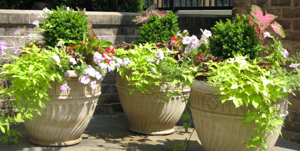 Make focal points more visible and attractive with eye-catching plants.