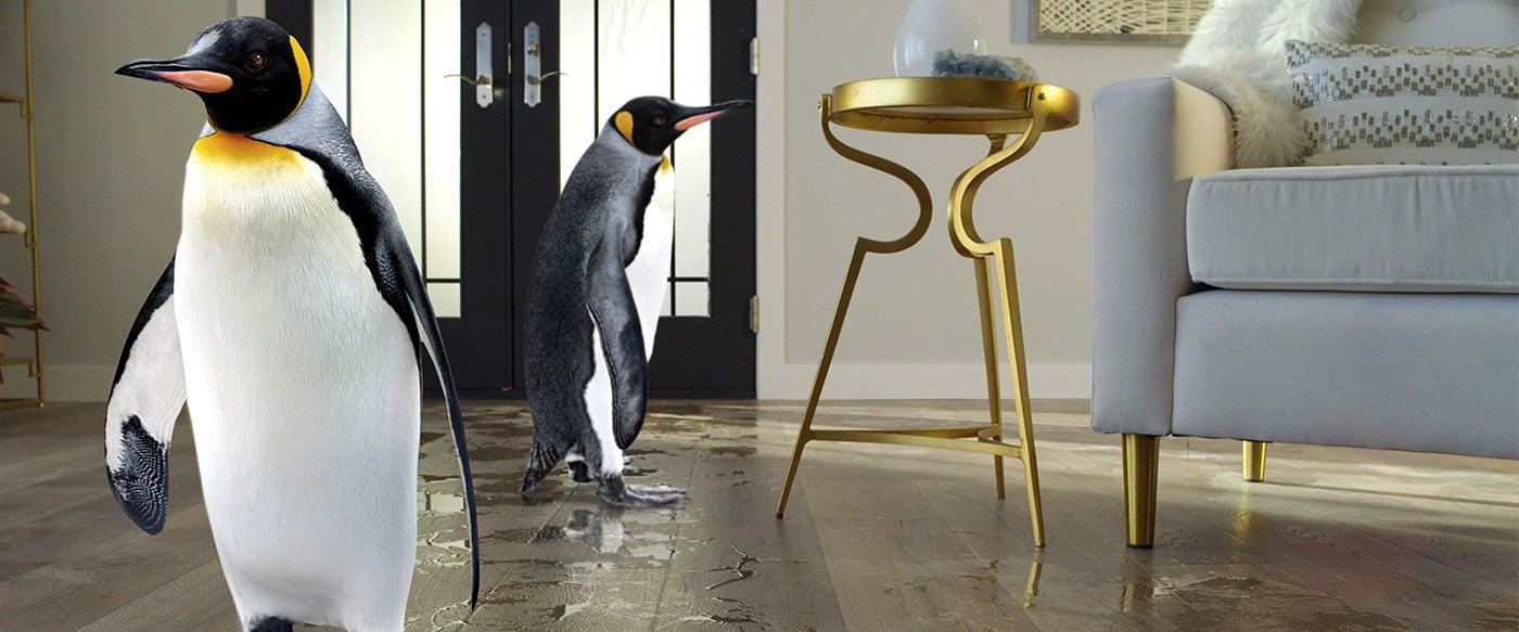 Penguins on TimberCraft floors
