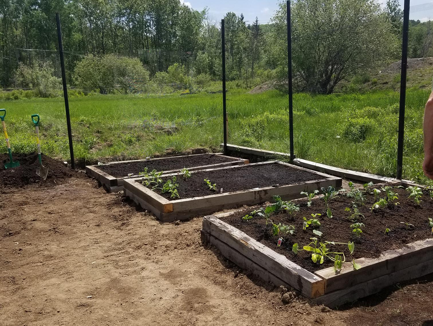 community-garden-crop