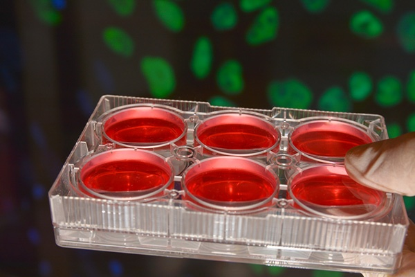 How Long Does Human Tissue Stay Viable for Research?