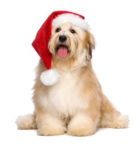 rms-pharmacy-pos-christmas-puppy.jpg