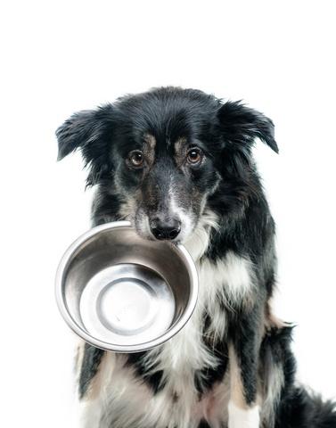 rms-pharmacy-pos-hungry-dog.jpg