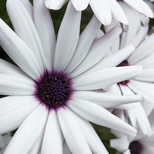 White Design Color