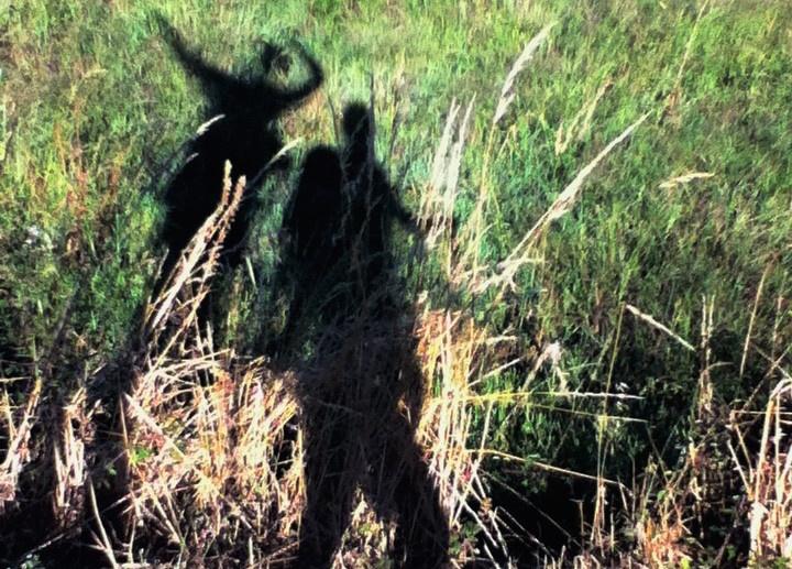 18_shadows_on_the_camino.jpg