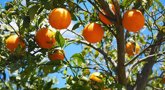 oranges-1117628_640-1.jpg