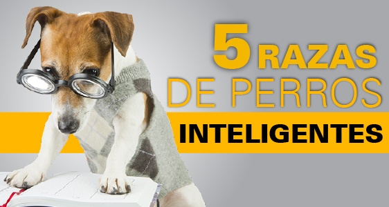 perro mas inteligente