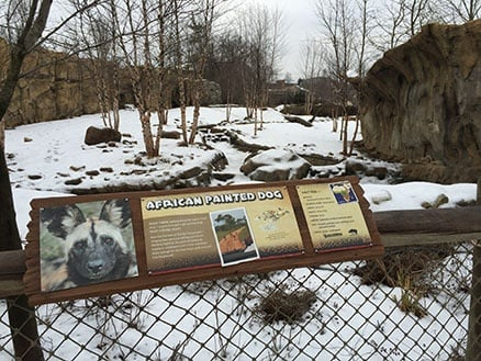 Cincinnati_Zoo_Painted_African_Dog_House_438.jpg