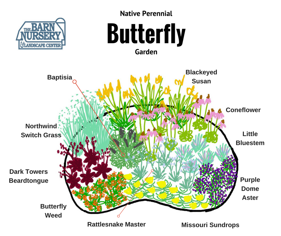 Plant this: A Native Perennial Butterfly Gardening Design