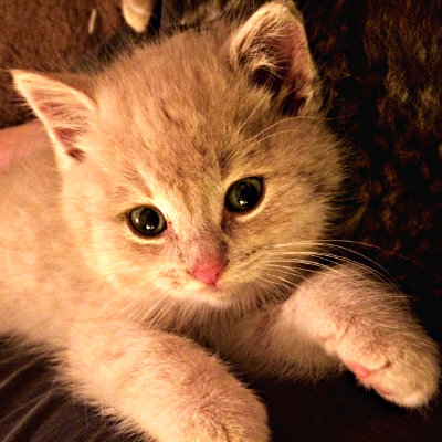 Can Cats Pass Illness To Humans