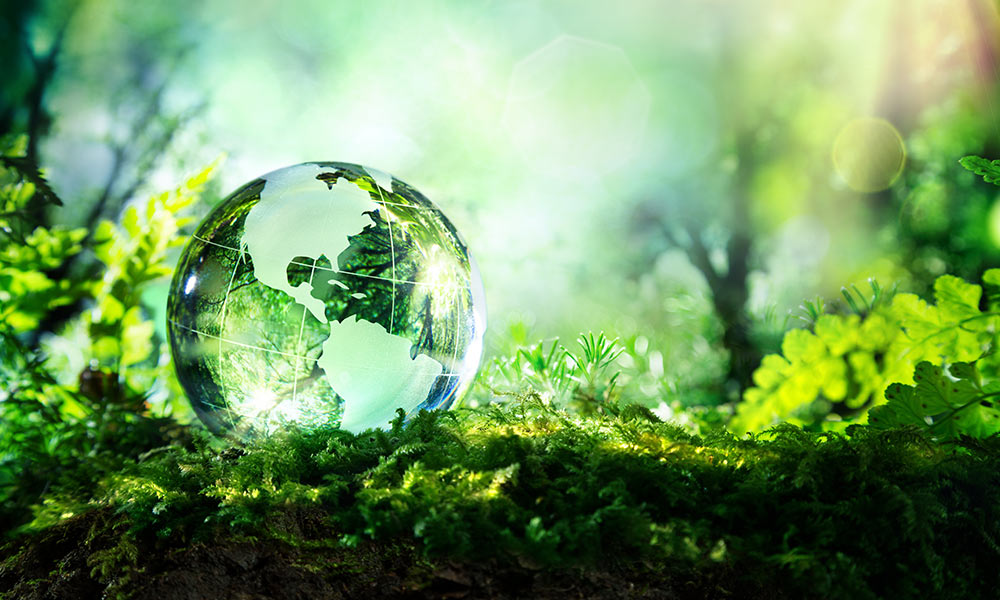 img-planet-globe-on-moss-forest-1000px.jpg