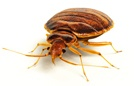 Bed Bug Treatment NJ | Bed Bug Treatment PA