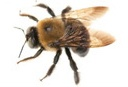 Remove Carpenter Bees in NJ and PA