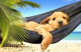 summer-puppy-320x206