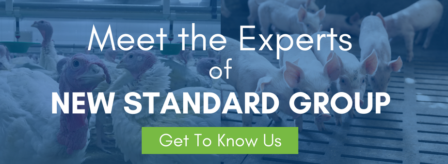 Meet the Experts at New Standard Group - Get to Know Us