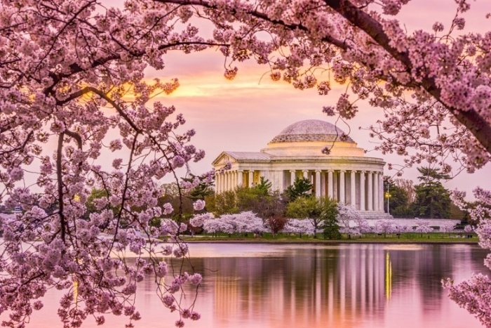 Thumbnail for Top Spots to See Cherry Blossoms in DC