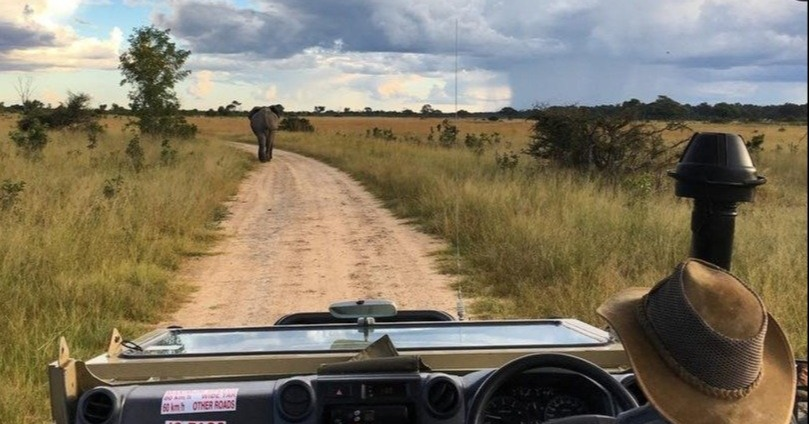 Game drive_ elephant- Hand sanitizer Covid-19 Health Procedures & Medical Evacuations - African Bush Camps Safari 10 Reasons Why Africa Should be First on Your Travel List Post-quarantine outdoor activities