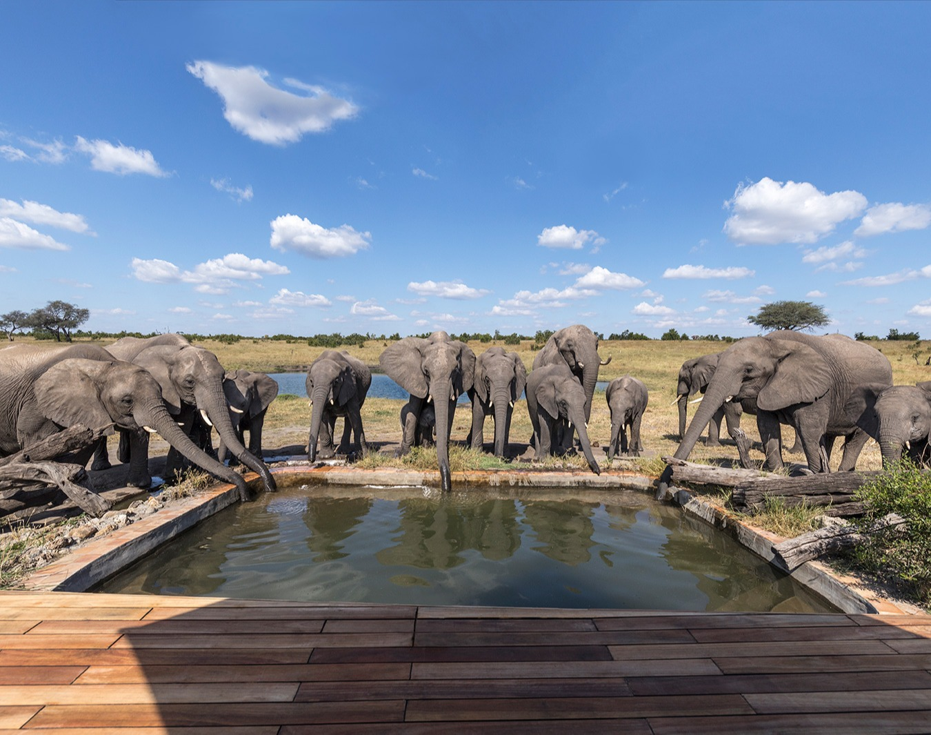 elephant-pool-somalisa-1
