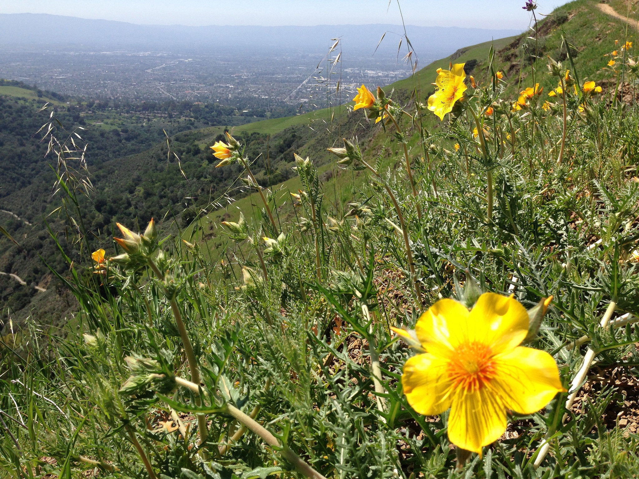 wildflowers-sierra-vista-open-space-preserve.jpg