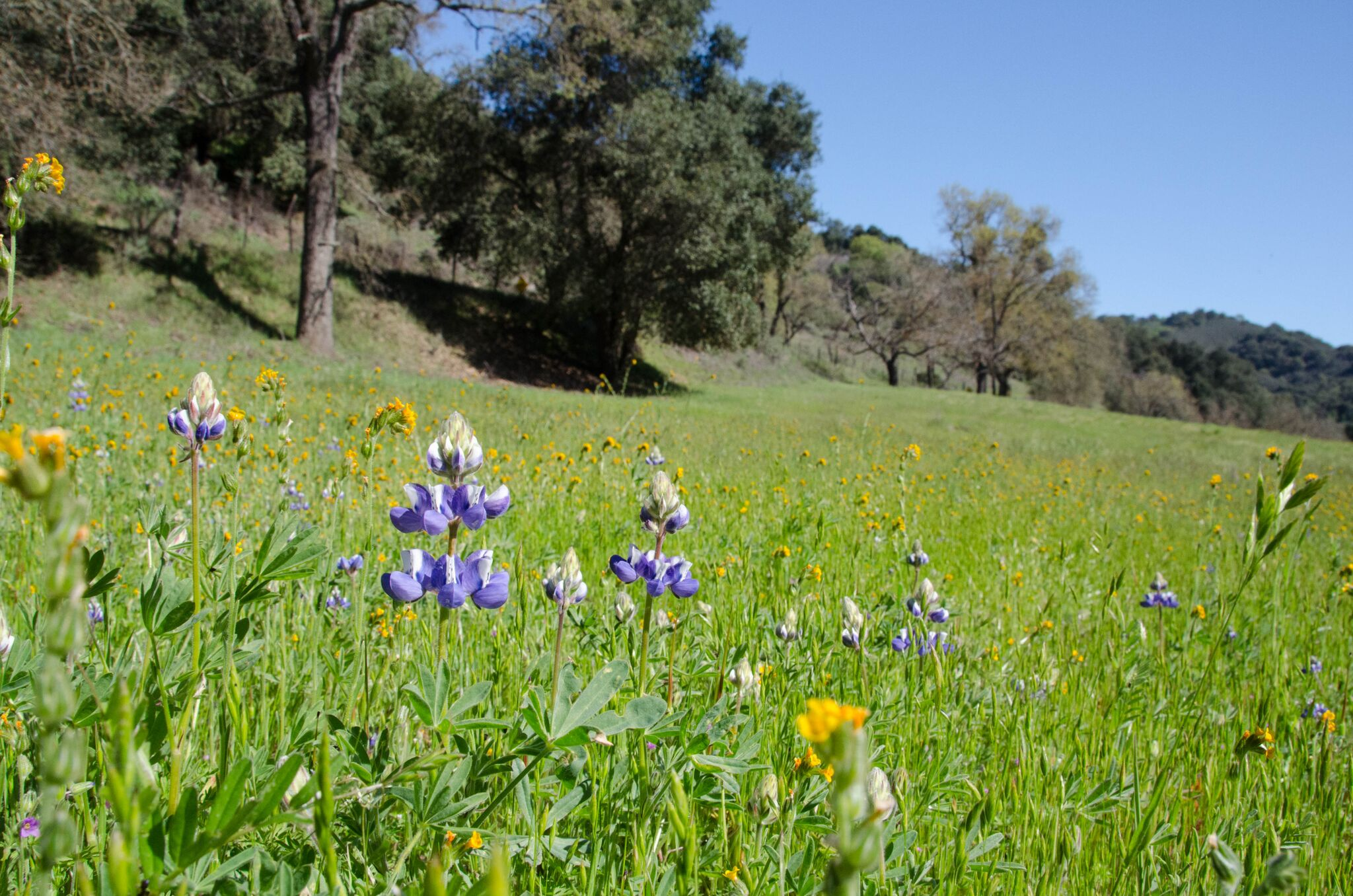 Llagas-Creek-Loop-Trail_Rancho-Canada-del-Oro-Open-Space-Preserve_Cassie-Kifer-6_preview