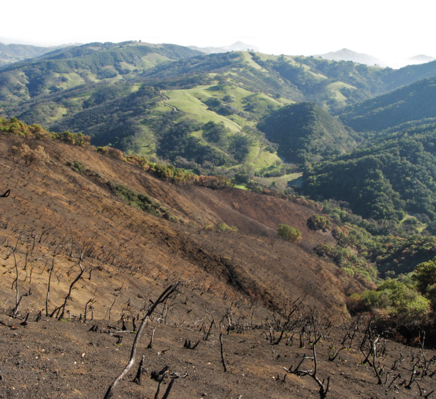 Loma_Fire_Image.png