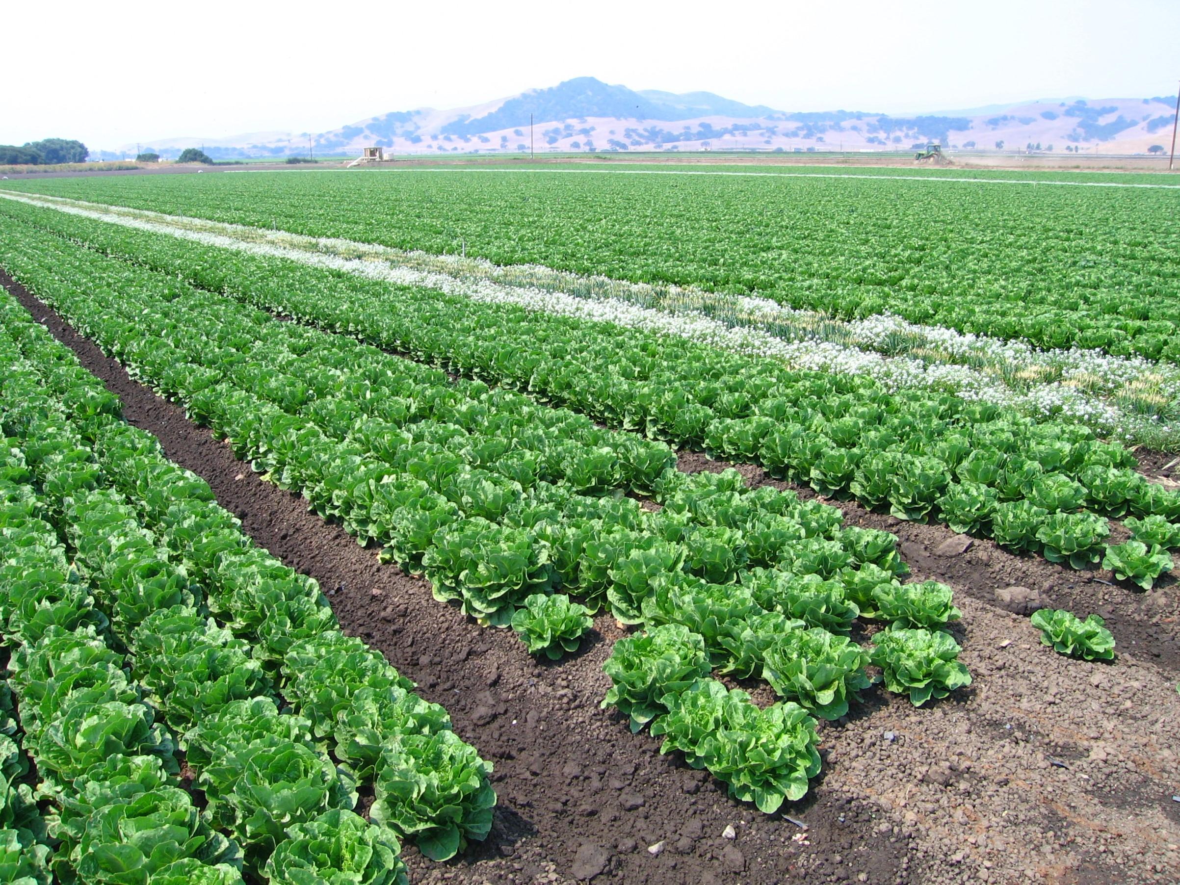 Row Crops - C.Hutnik - 06-2008 - 9