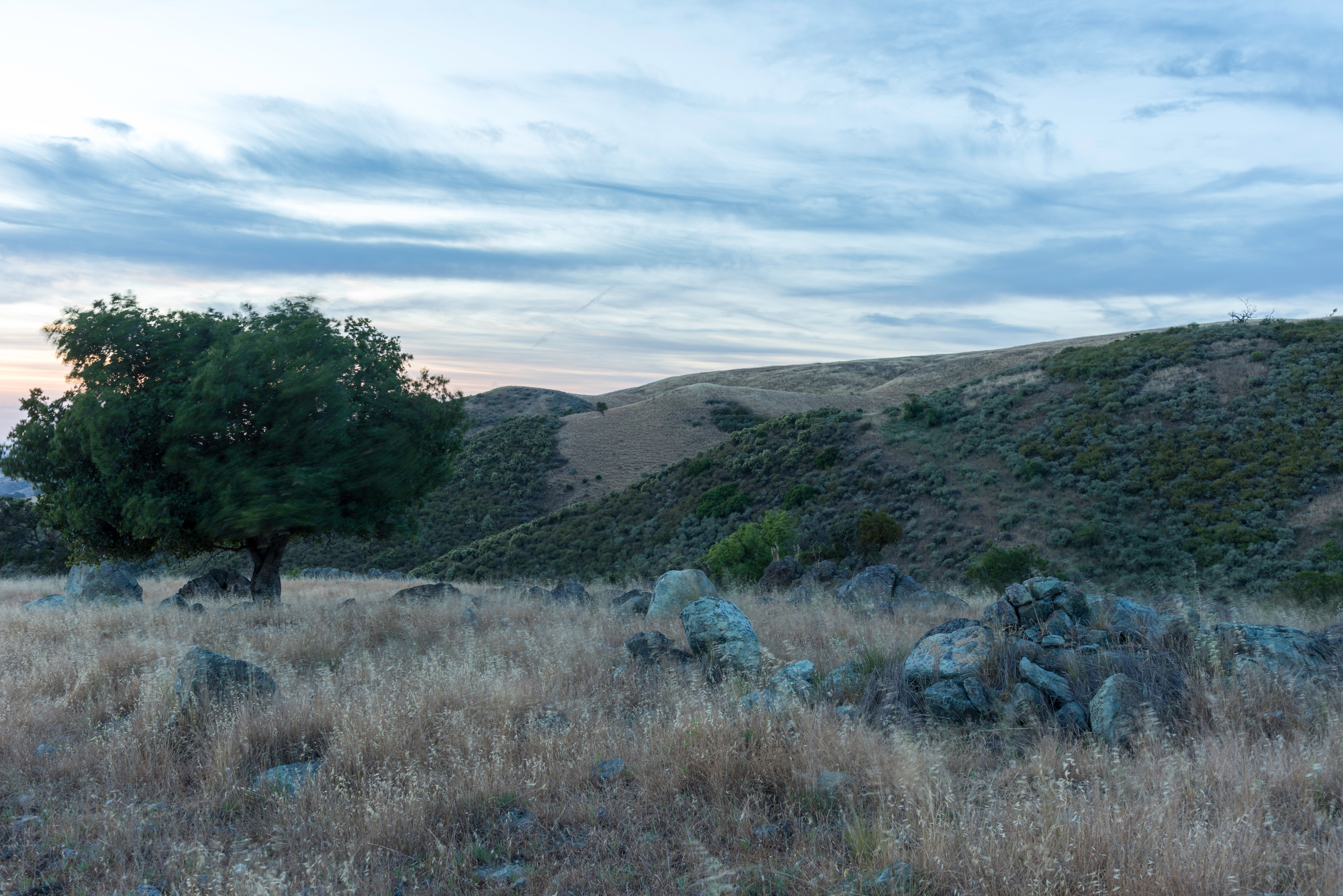 2017_May_Coyote Ridge OSP-1_D Neumann