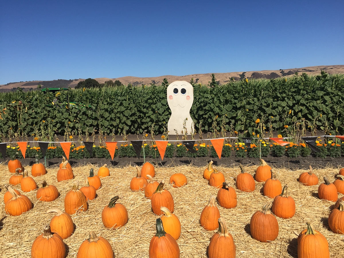 spina-farms-pumpkin-patch-2017-31