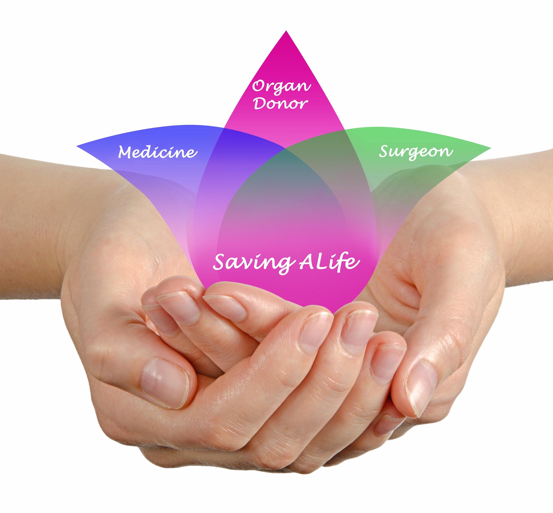 donate_life_organ_donor_transplant_graphic.jpg
