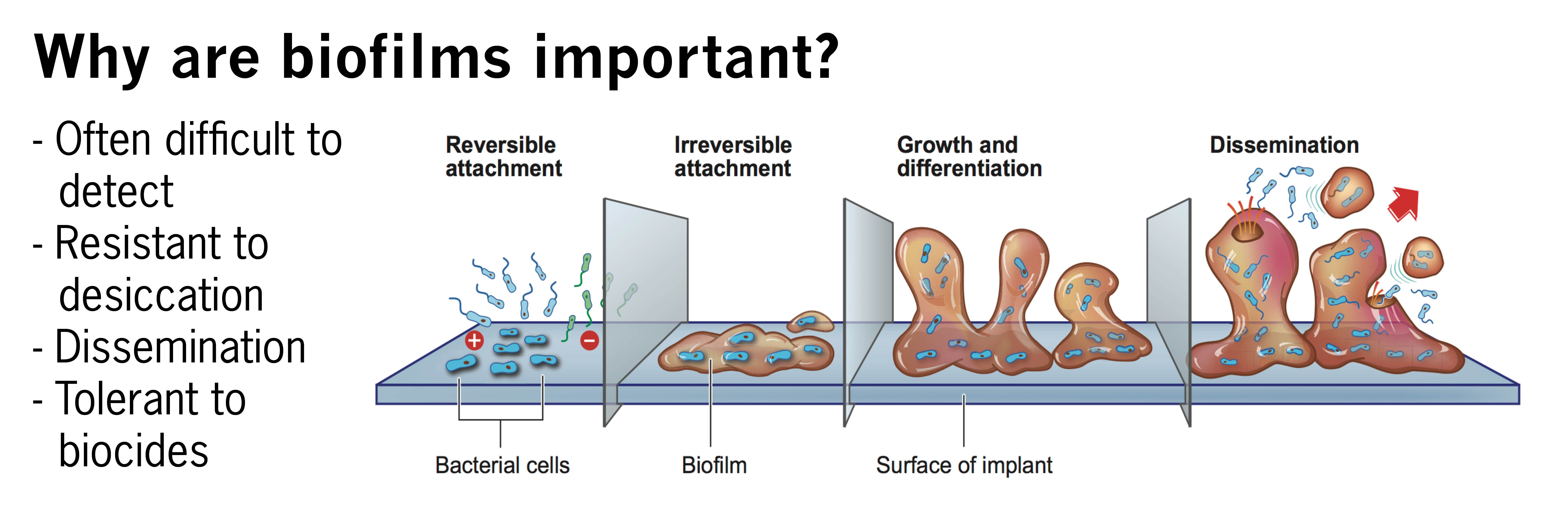 Biofilms Important low res.jpg