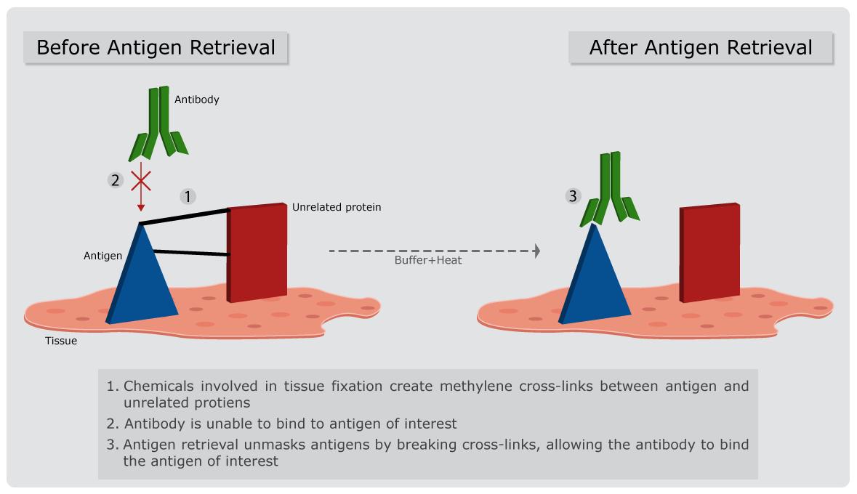 Antigen Retrieval Infographic
