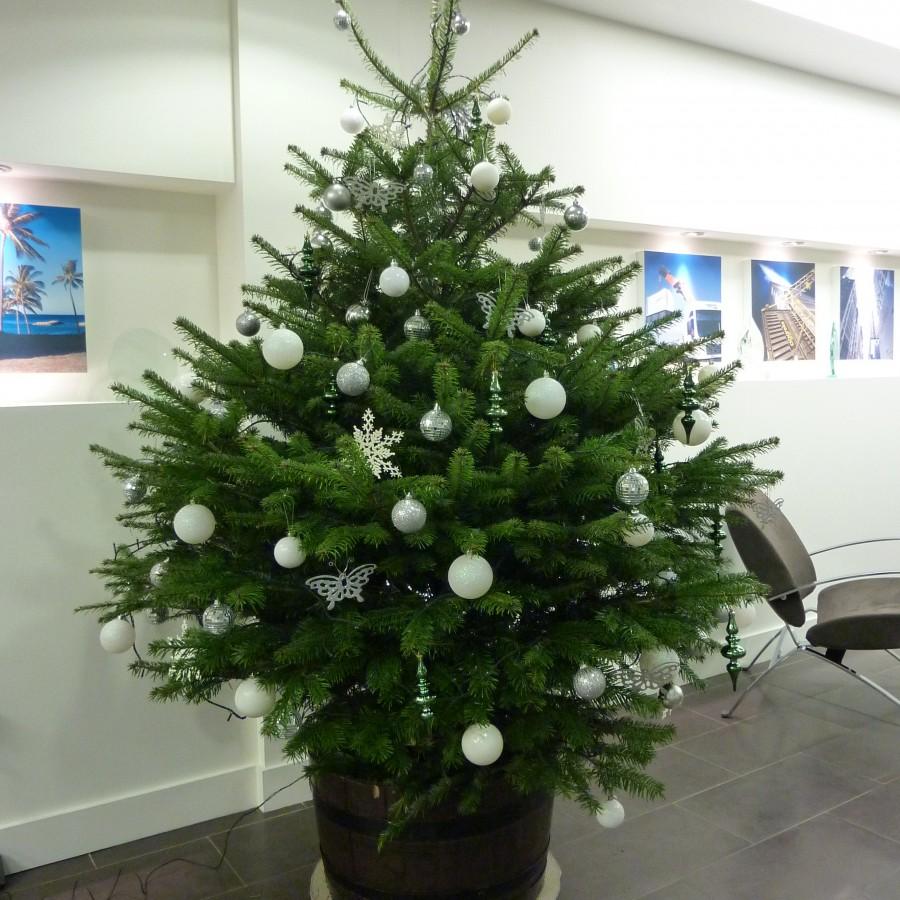 Why Christmas Trees: Real Christmas Trees