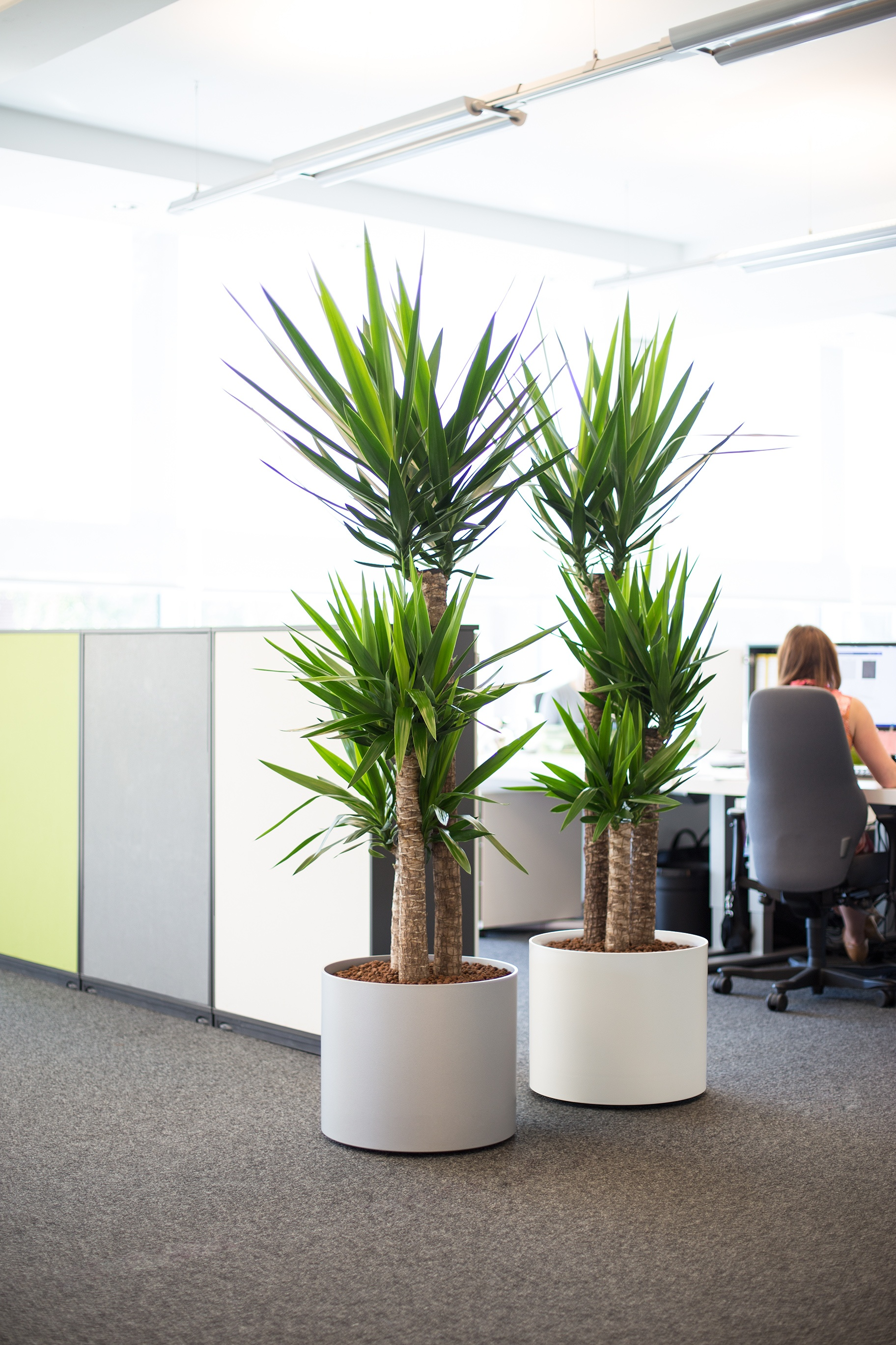 Image Of Interior Worke With 2 Potted Office Plants