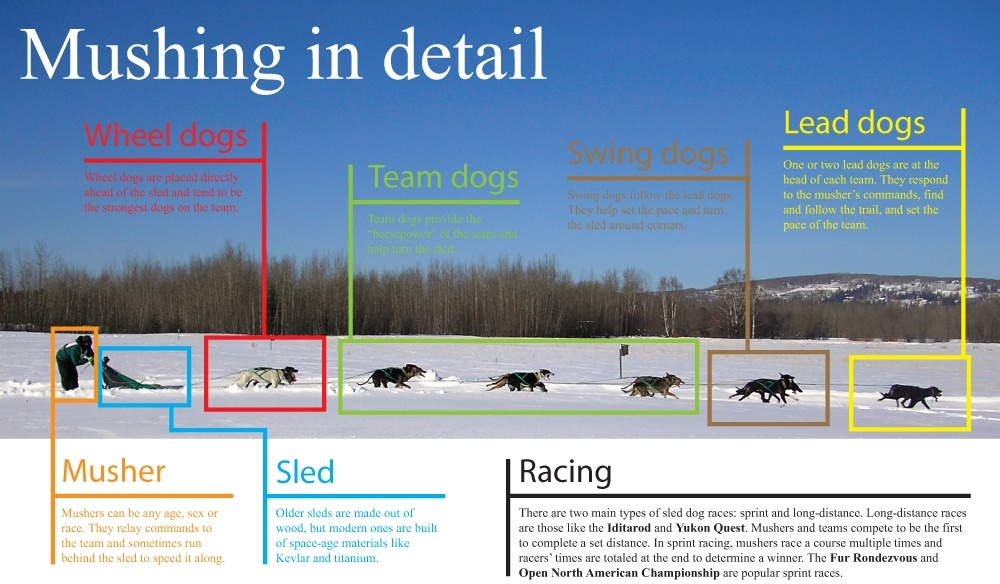 Lead Dog - Mushing Graphic