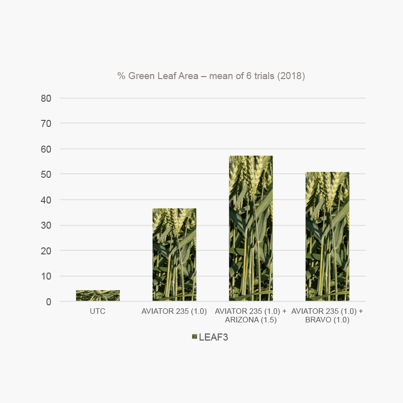 2019 - Staying ahead of the game: protecting wheat at T1